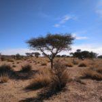 PODEMOS EXPRESA SU SOLIDARIDAD CON LOS SAHARAUIS QUE SE MANIFIESTAN EN EL PASO FRONTERIZO DE GUERGUERAT